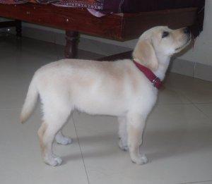 Bruno's Profile :-)